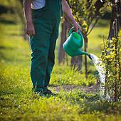 Senior man watering his garden/orchard - Stock Image - CB5RTP