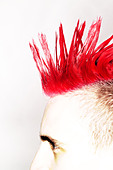 Side view of Punk rocker with red mohican - Stock Image - A9HJ45