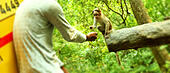 Young boy feeding a small monkey . - Stock Image - KDDG09