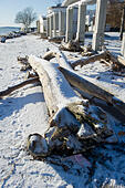 Sassnitz, Germany. 06th Jan, 2017. Fallen trees in the Baltic resort town of Sassnitz, Germany, 06 January 2017. The aftermath of the storm has drawn droves of visitors curuous to inspect the damage to the area. The head of the local district authority Drescher (CDU) warned visitors and locals not to walk too close to the edges of cliffs. Photo: Stefan Sauer/dpa-Zentralbild/dpa/Alamy Live News - Stock Image - HGAEEW