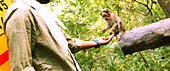 Young man feeding a small monkey - Stock Image - KDDG10