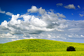 Summer landscape - saturated view of meadow. Europe, Poland. Adobe RGB (1998). - Stock Image - B3TK3R