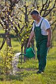 Senior man watering his garden/orchard - Stock Image - CB5RX6