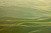 High angle view of a farm, Steptoe Butte, Palouse, Washington State, USA - Stock Image - C55W5J