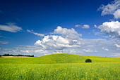 Summer landscape - saturated view of meadow. Europe, Poland. Adobe RGB (1998). - Stock Image - B3RC16