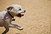 Culver City Dog Park Culver City Los Angeles County California United States of America - Stock Image - BAFW1N