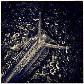 Snail close up - Stock Image - S0DX31