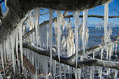 Sassnitz, Germany. 06th Jan, 2017. Impressive icicles hang from the branch of a tree after storm tides in the Baltic resort town of Sassnitz, Germany, 06 January 2017. The aftermath of the storm has drawn droves of visitors curuous to inspect the damage to the area. The head of the local district authority Drescher (CDU) warned visitors and locals not to walk too close to the edges of cliffs. Photo: Stefan Sauer/dpa-Zentralbild/dpa/Alamy Live News - Stock Image - HGAEET