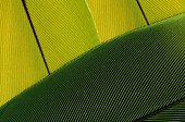 PARROT FEATHERS - Stock Image - B8CAFY