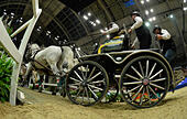 London, UK. 17th Dec, 2016. Olympia The London International Horse Show at Grand Hall Olympia London UK. The FEI World Driving leg Credit: Leo Mason sports photos/Alamy Live News - Stock Image - HE614K