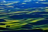 High angle view of green fields, Steptoe Butte, Palouse, Washington State, USA - Stock Image - C55W0A