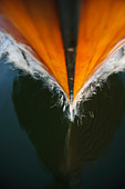 Reflection of prow cutting through water - Stock Image - BMEBR9