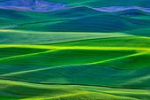 High angle view of green fields, Steptoe Butte, Palouse, Washington State, USA - Stock Image - C55TXB