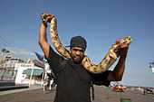 Man with pet python on the boardwalk at Coney Island - Stock Image - A5KWW4