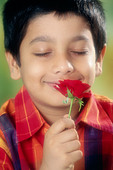 small young boy smelling red rose   MR#152 - Stock Image - CE6DNJ