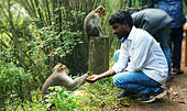 Young man feeding a monkey - Stock Image - KDDK77