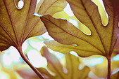 beautiful leaf in a contemporary style fine art photography Jane Ann Butler Photography JABP533 - Stock Image - BD90GN