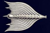 Thalamophora / Kammerlinge, Name Globigerina, Haeckel, Kunstformen der Natur, art nouveau, 20th century, Europe - Stock Image - B62DJ6