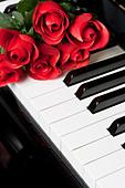 Piano Key close up shot - Stock Image - BMF00F