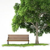 bench under a tree isolated on white background with clipping path - Stock Image - C4TMTJ